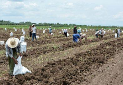 Cuba en Datos: Agricultura, sector estratégico que precisa despuntar