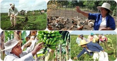 Declarados patios de la agricultura familiar en Caibarién