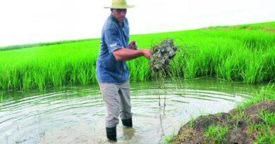 Asegurar la producción de alimentos en la etapa pos-COVID-19: una voluntad de país