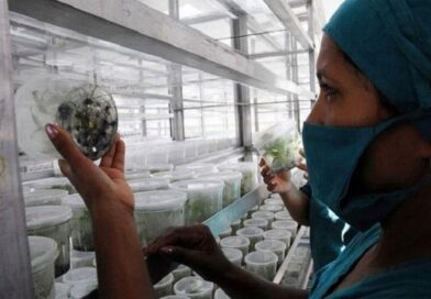 Villa Clara impulsa producción local de alimentos con base científica